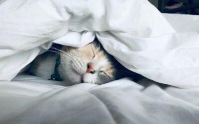 Healy voor beter slapen