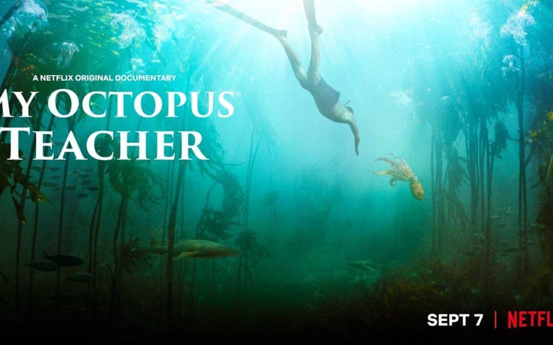 Wow, zo mooi! My Octopus Teacher