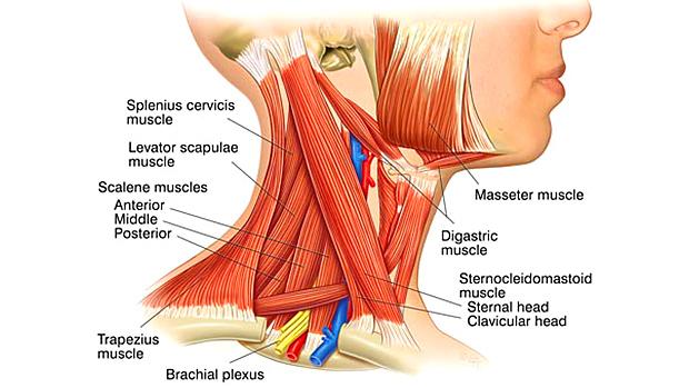 Massage van de nek en schouders – deel 2